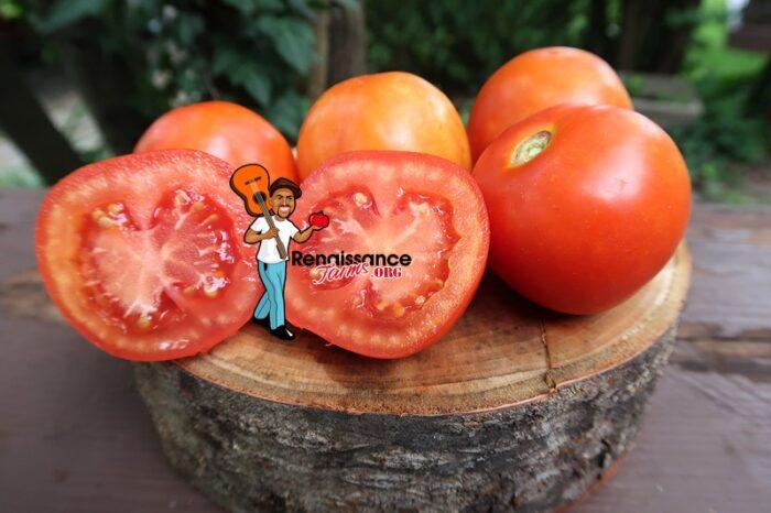 Burgurland's Triumph Tomato 2109