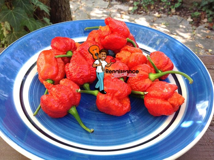 Dragon's Breath Pepper Images