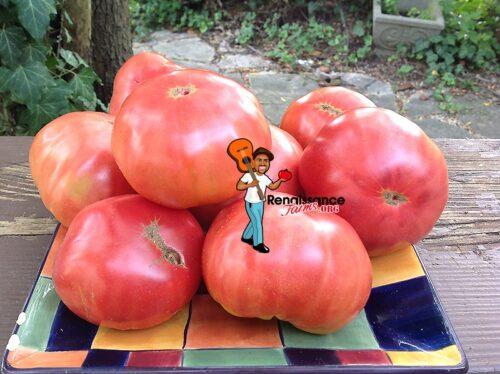 Dwarf Mystic Lady Tomato