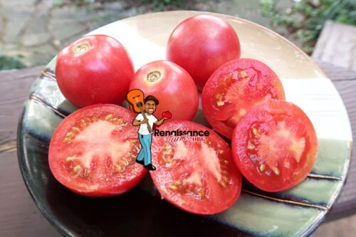 Dwarf Rosalinda Tomato