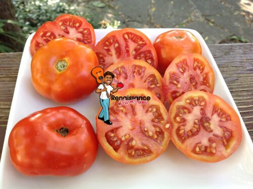Dwarf Surender's Indian Curry Tomatoes