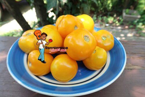 Dwarf Yantarnyi Tomato 2019