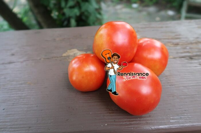 Earliest Of All TomatoES