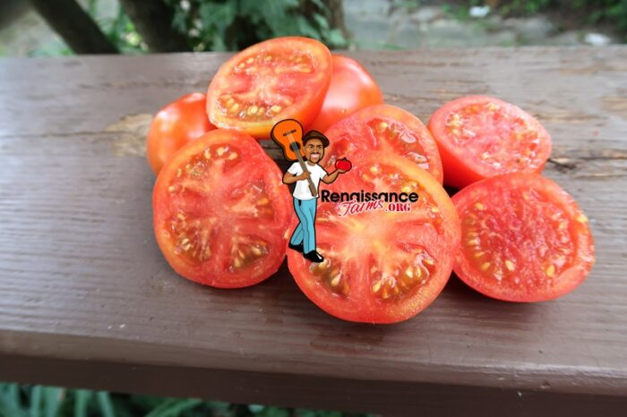 Earliest Of All Tomato Red
