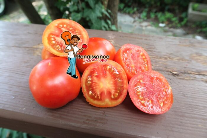Earliest Of All Tomato 2019