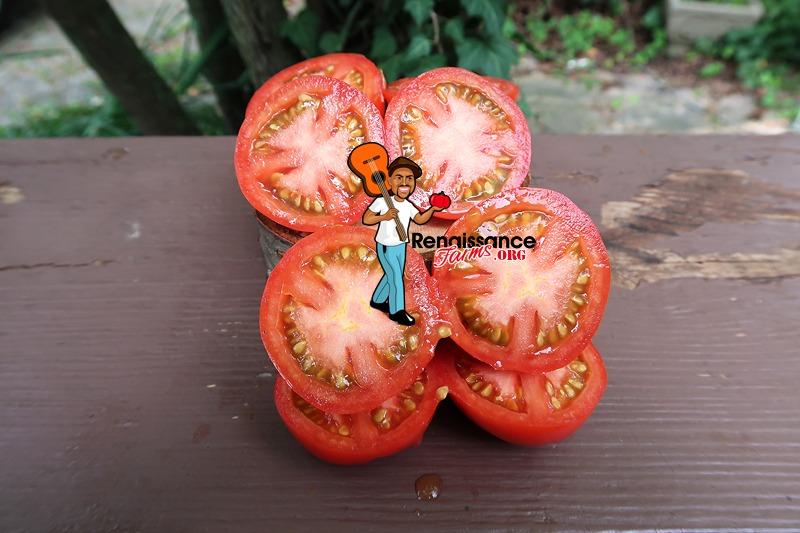 Early Pak Tomato iMAGES