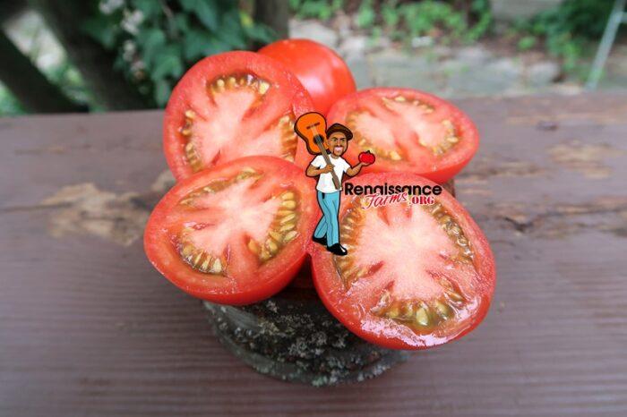 Early Pak Tomato