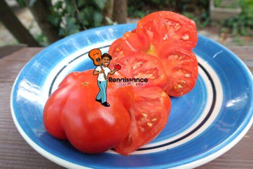 President Garfield Tomato