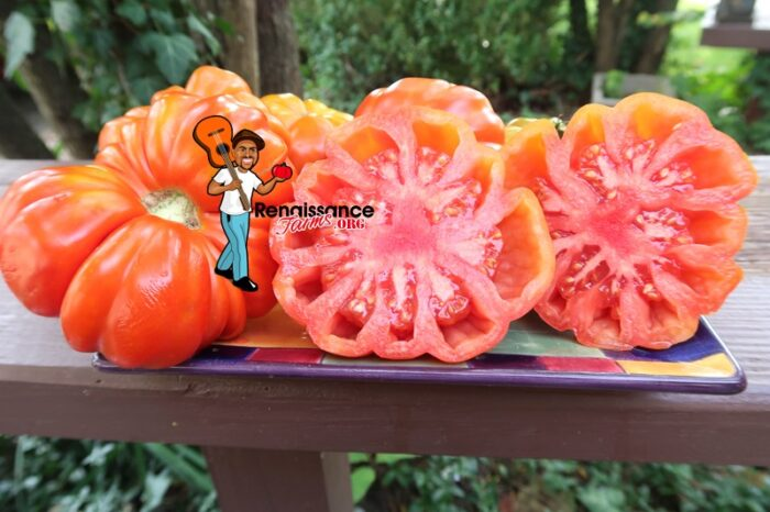 Salsa Pomodoro Tomato