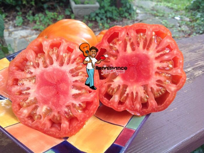 Salsa Pomodoro Tomato Image