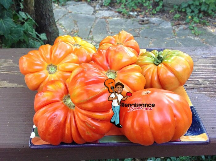 Salsa Pomodoro Tomato For Sauce