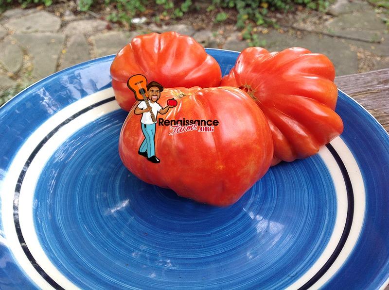 Sierra Leone Tomatoes