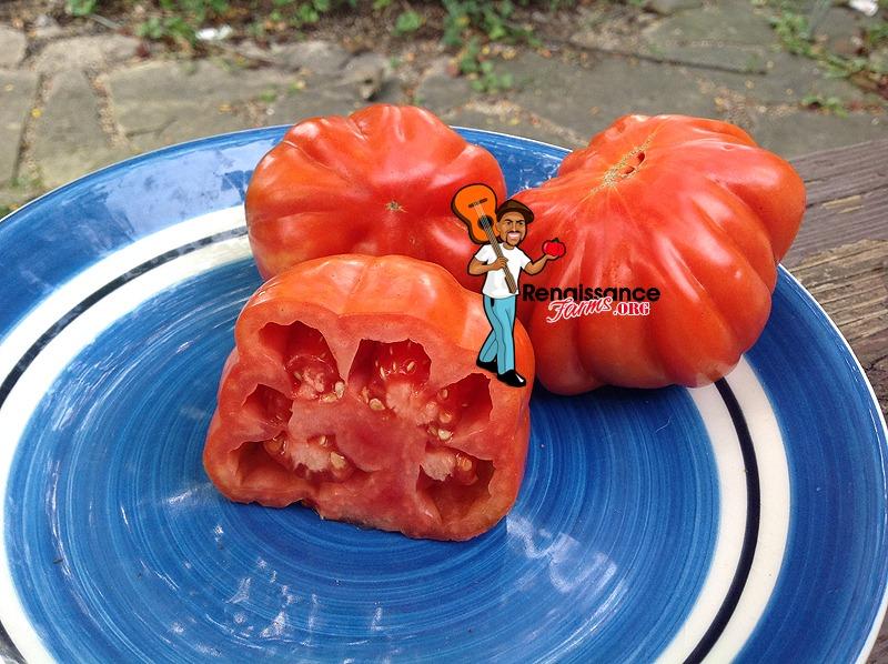 Sierra Leone Tomato 2019