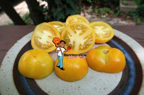 Summer Sunrise Tomato