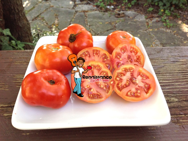 Dwarf Surender's Indian Curry Tomato