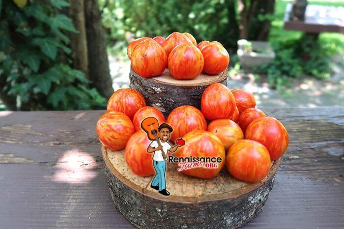 Tigrette dwarf Tomato