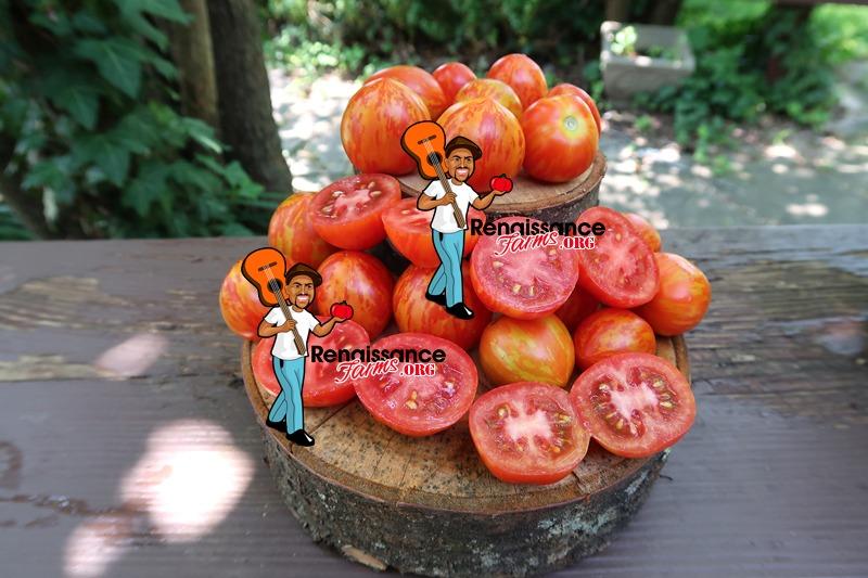 Tomato Tigerette