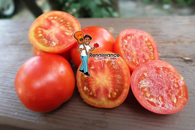 Earliest Of All Tomato