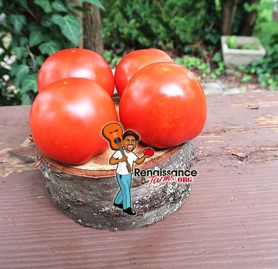 Early Pak TomatoES