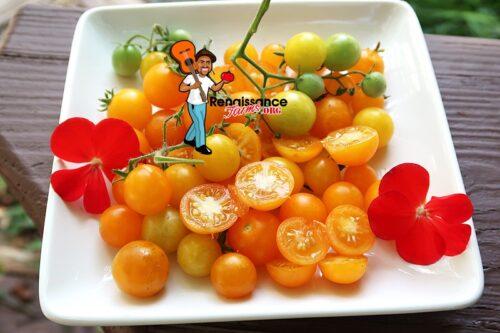 Micro Dwarf Yellow Pigmy Tomato