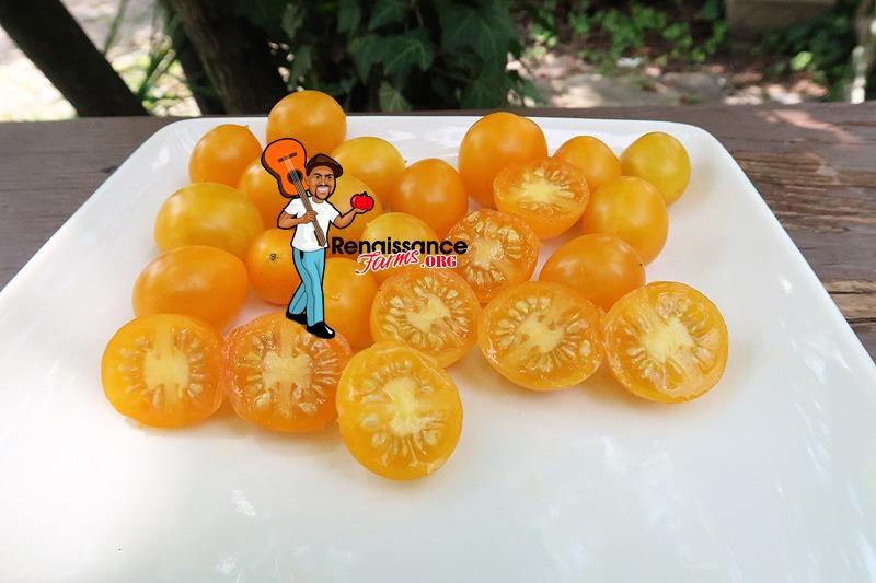 Zluta Kytice Tomato On Plate