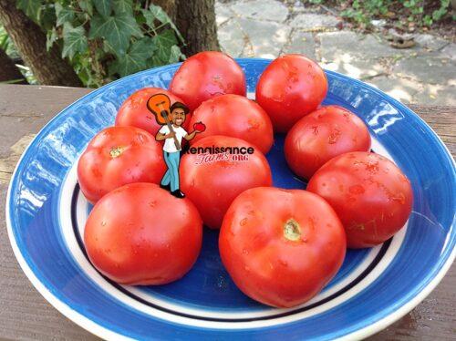 Triumph Tomato 2019