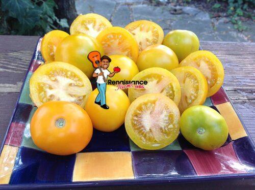 Tschechische Gelbe Tomato Yellow