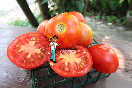 Tuckwood Favorite TomatoES