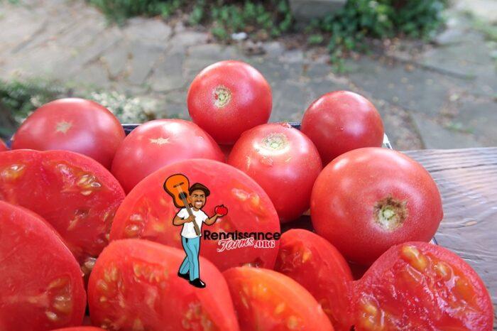 Vineyard Wine Tomato Pink