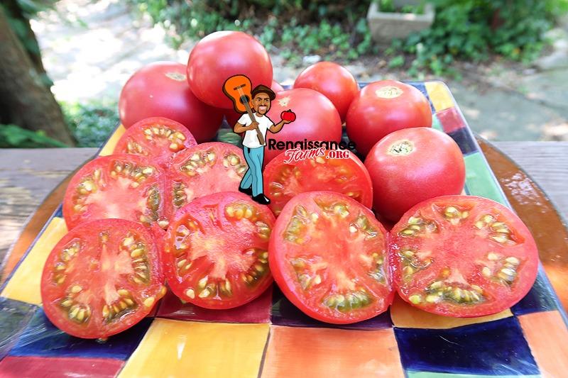 Vineyard Wine Tomato 2020