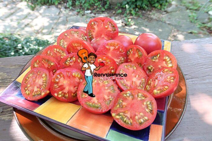Vineyard Wine Tomato Slices