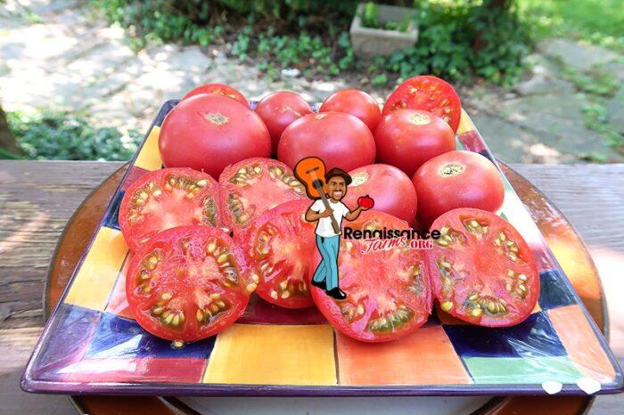 Vineyard Wine Tomato Rare