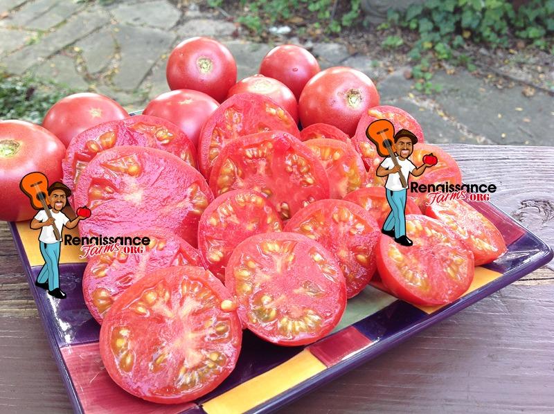 Vineyard Wine Tomato 2019