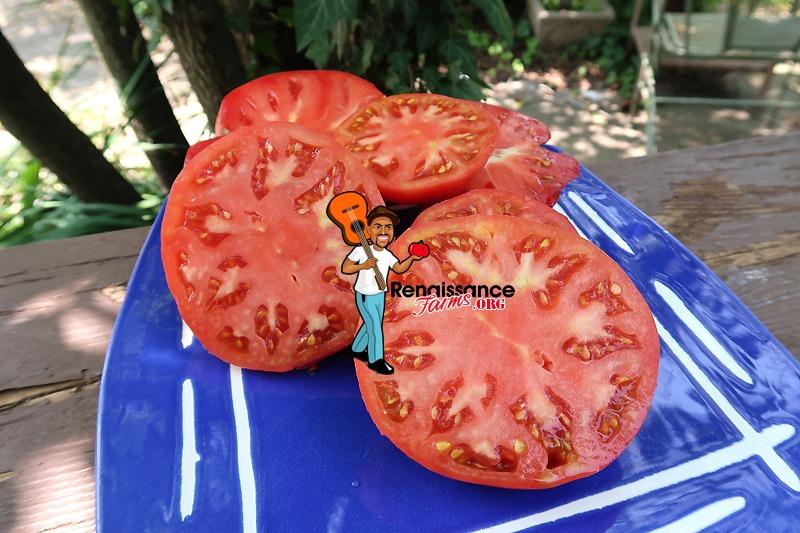 Winsall Tomatoes