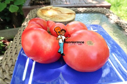 Winsall Tomato Picture