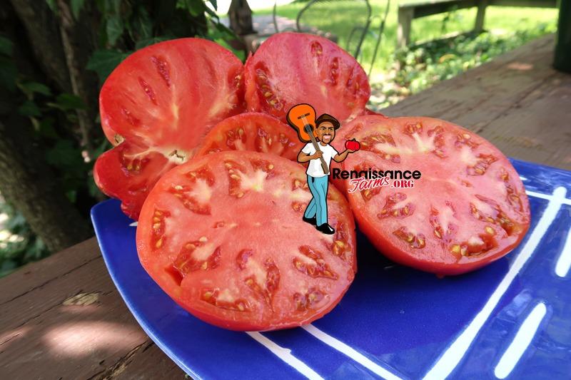 Winsall Tomato On Plate
