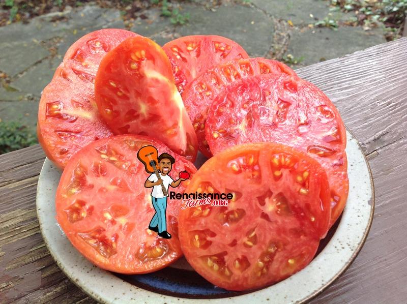 Winsall Tomato sLICING
