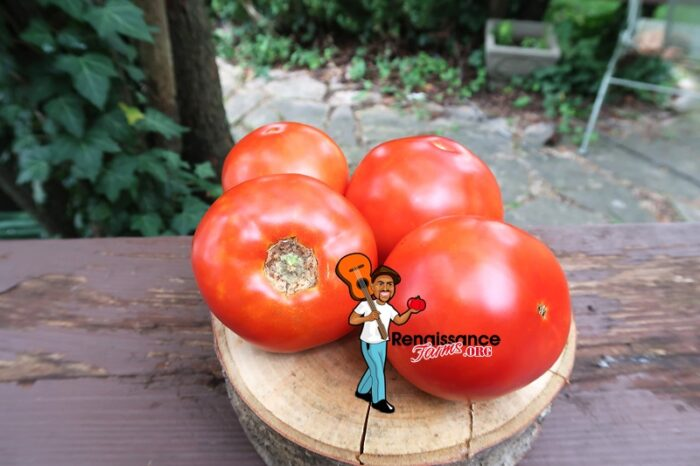 Wisconsin 55 Tomatoes