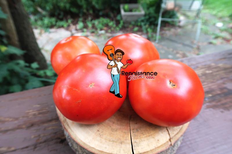 Wisconsin 55 Tomato Images
