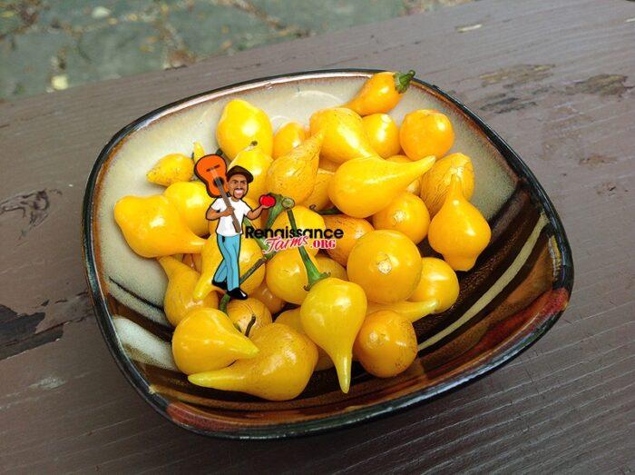 Biquinho Pepper Yellow Images