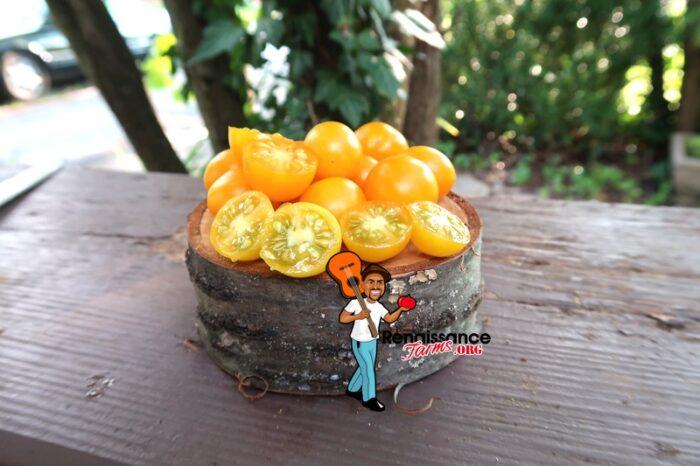 Zluta Kytice Tomato Images