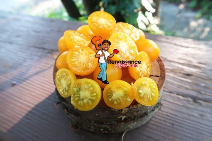 Zluta Kytice Tomato