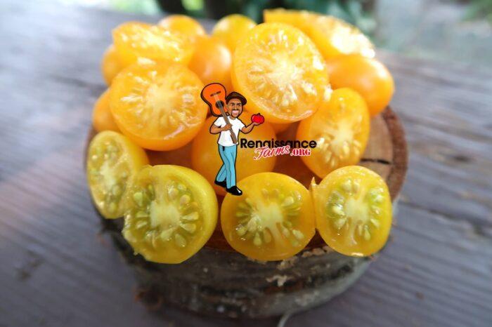 Zluta Kytice Tomatoes