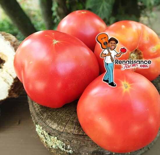 Alexander B Tomato
