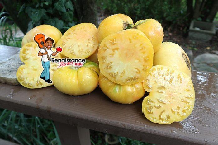 Buckeye Yellow Tomato