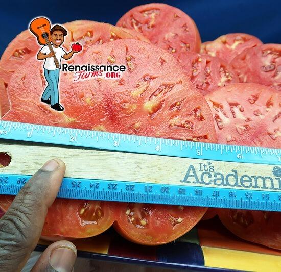 West Virginia Sweetmeat Tomato