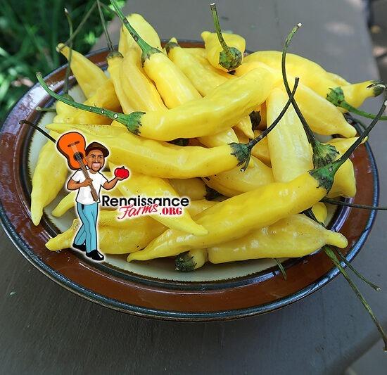 Aji Pineapple Pepper