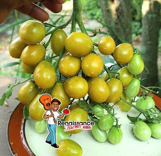 Amber Keyes Tomato