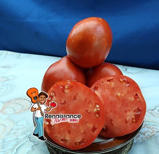 Amish Canning Tomato