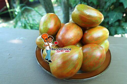 Dwarf Audrey's Love Tomato